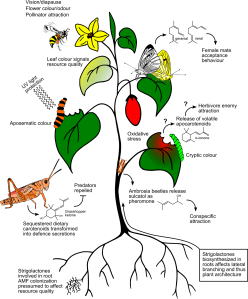 A stylized, schematic representation of the various known and hypothesized functions of carotenoids in insects that mediate ecological interactions.