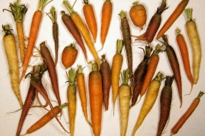 Diverse carrots colored by carotenoids