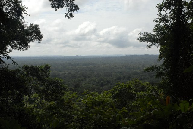 Endless forest seen from the Mirador trail at Shiripuno